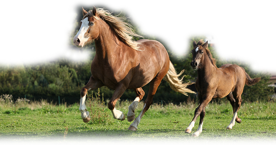 Mare-With-Foal-Running